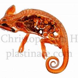 Cameleon reptile anatomy print